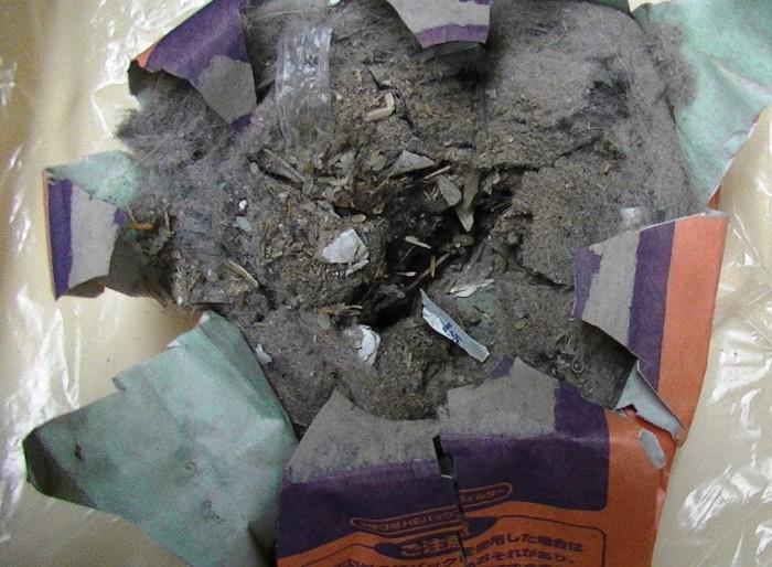 PIC_0548掃除機ゴミ