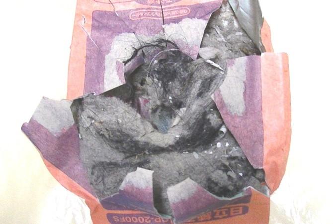 PIC_0560掃除機ゴミ 富士見市2